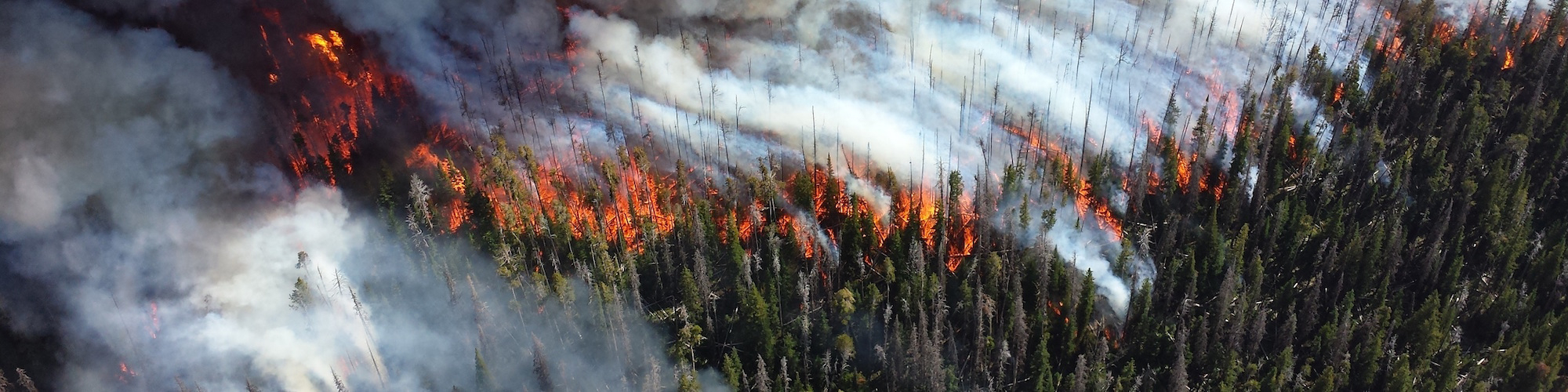 Forest Fire Image